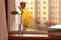 Room 304 window view