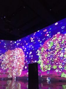 Interactive art exhibit showing digital cherry blossoms on floor length screens.