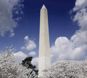 The Washington Monument soars high above the Cherry trees that are in full bloom in Springtime