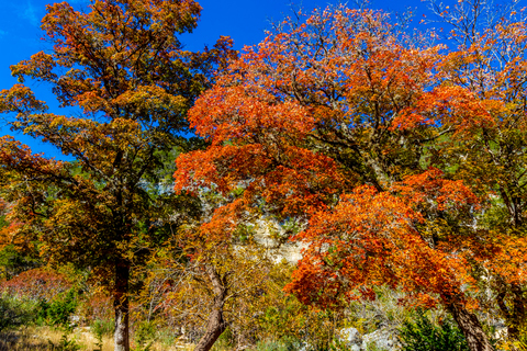 Colorful autumn trees against a vivid blue sky