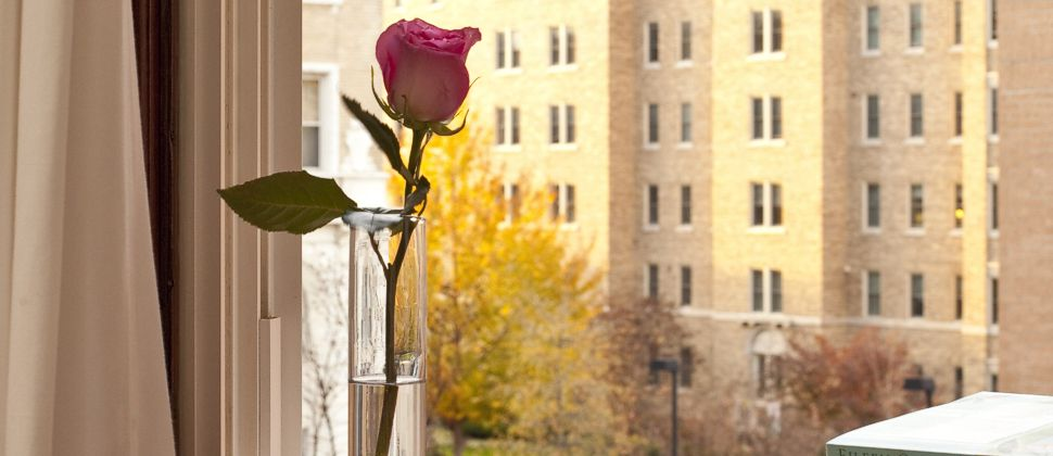 Dark pink rose in a tall thin glass vase in front of a guest room window overlooking D.C.